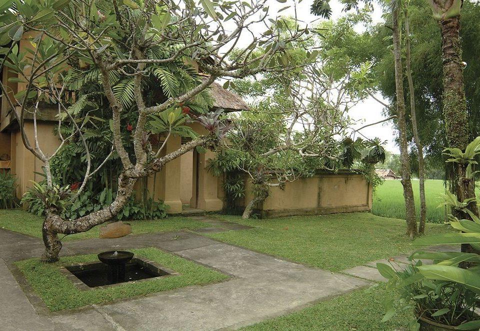tree grass property botany plant Resort Courtyard yard Garden home Villa arecales hacienda backyard Jungle plantation cottage mansion landscape architect lawn palm stone shade