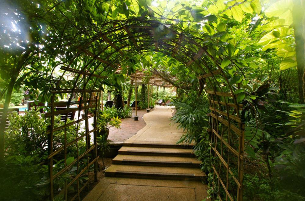 tree green botany Garden Resort arecales flower Jungle Courtyard greenhouse sunlight botanical garden rainforest plantation tropics outdoor structure plant bushes walkway