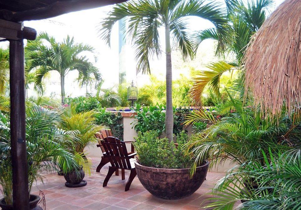 tree plant palm property Resort botany palm family Garden arecales Courtyard backyard Jungle Villa yard botanical garden