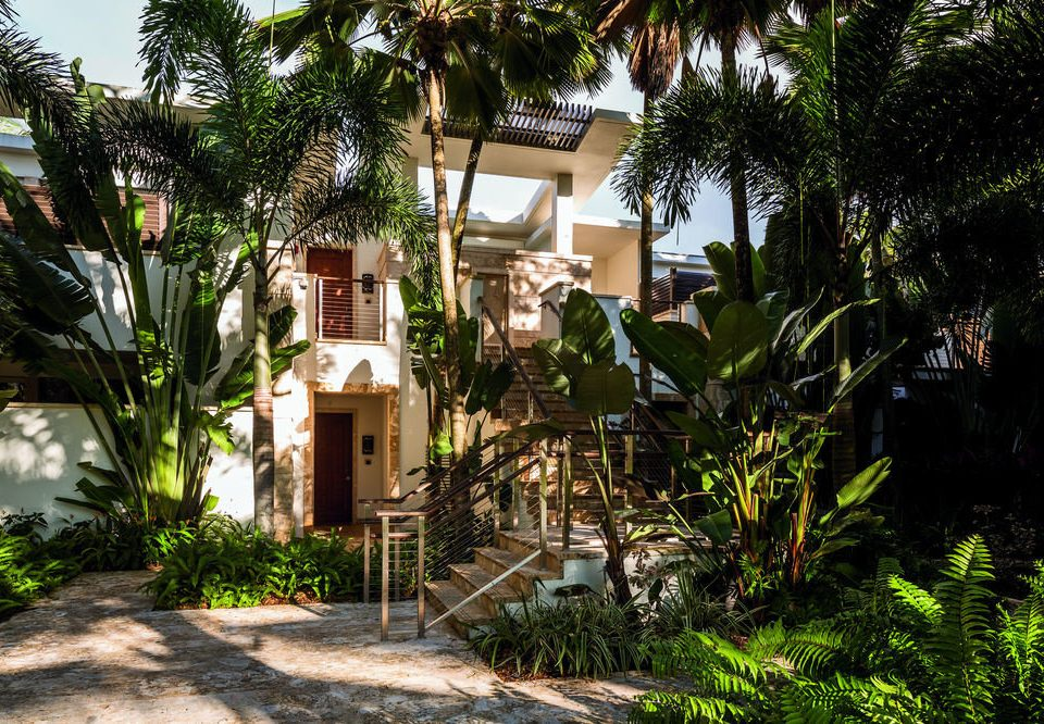tree plant Resort property botany house arecales Jungle home Village Garden Courtyard tropics Villa cottage palm