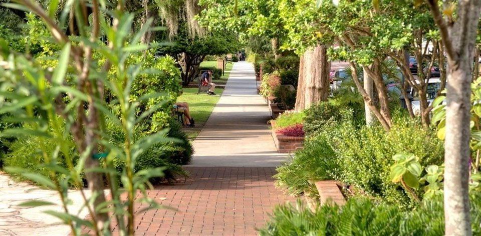 tree ground property plant Garden walkway yard arecales Courtyard backyard flower Resort lawn landscape architect botanical garden Jungle