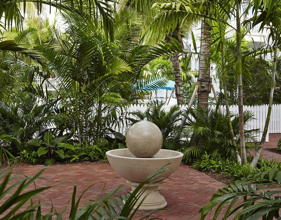 tree ground plant palm flora Garden botany grass yard palm family backyard arecales flower Jungle Resort Courtyard botanical garden tropics