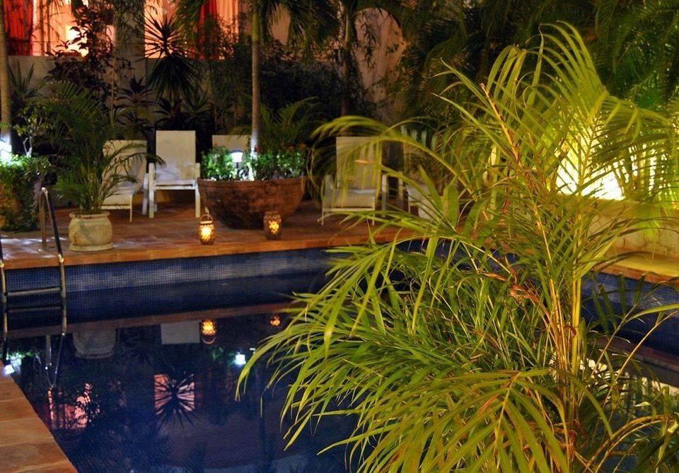 Lounge Modern Pool tree swimming pool backyard landscape lighting Resort arecales Garden Courtyard yard flower palm plant