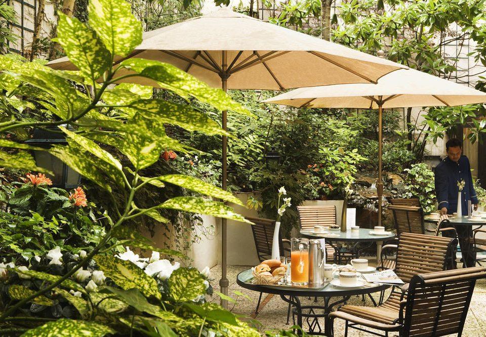 tree chair backyard floristry outdoor structure Garden Resort gazebo Courtyard yard Patio cottage shade
