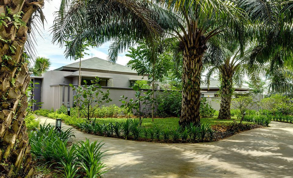 tree plant property house botany street walkway Resort arecales home residential area palm Garden Courtyard plantation flower palm family backyard yard lined