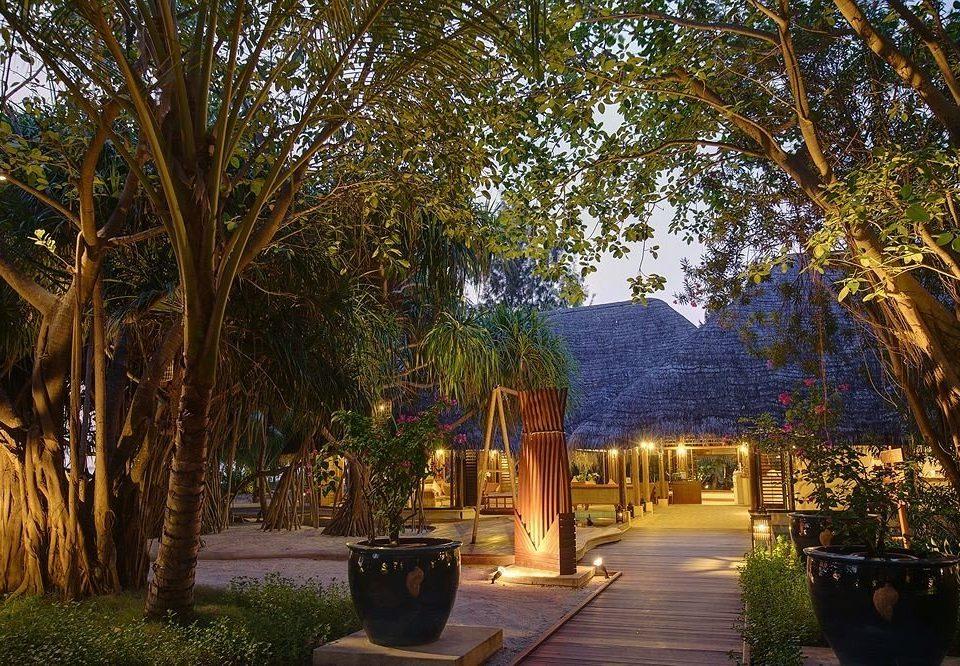 tree plant house home Resort Garden backyard landscape lighting autumn Courtyard