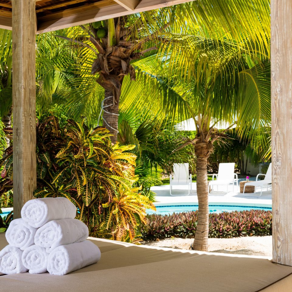 tree Resort botany home arecales Courtyard backyard Garden plant Villa flower palm
