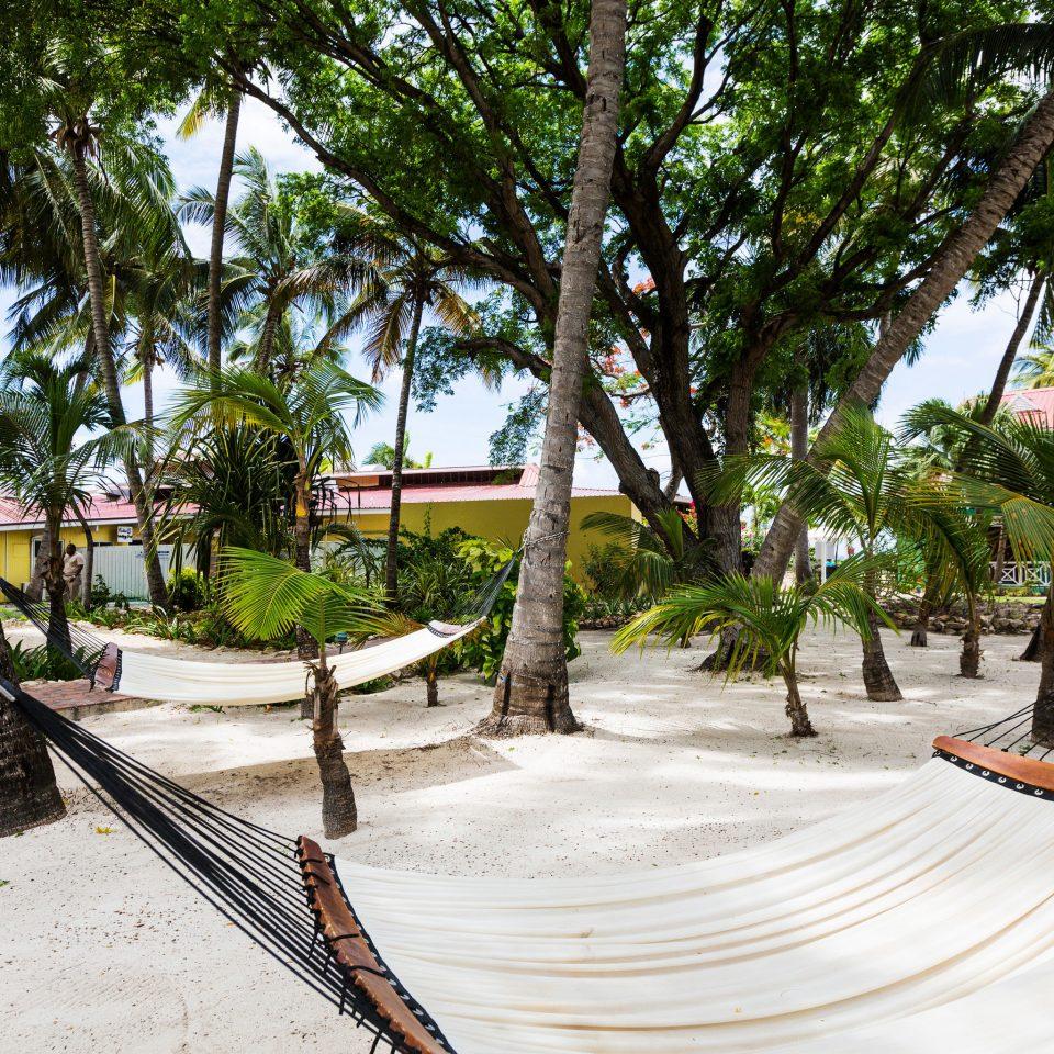 tree ground park walkway Courtyard Resort arecales home Village Villa Garden travel plant stone
