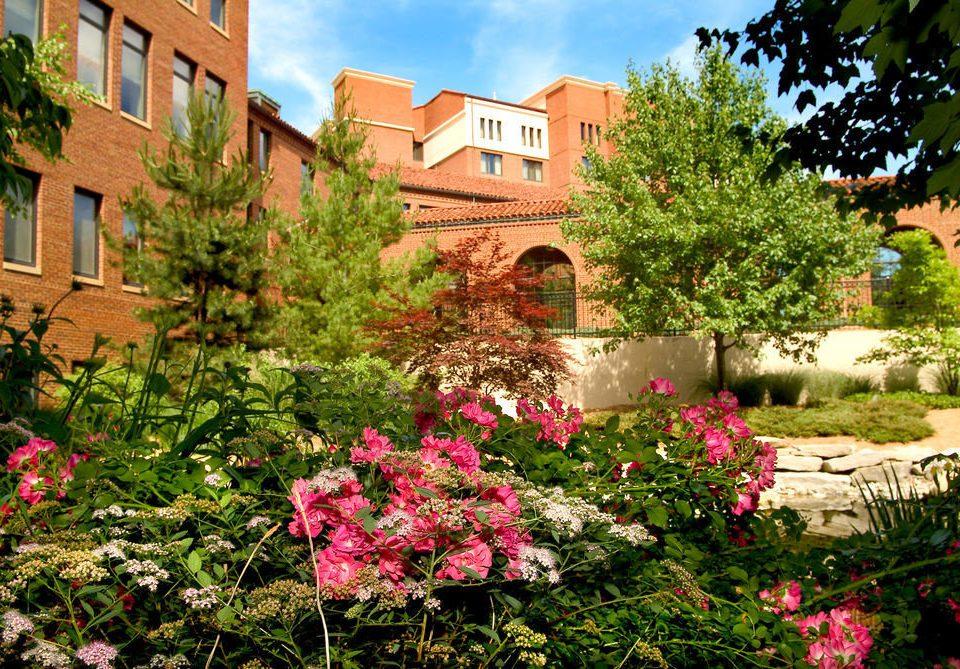 tree flower Garden neighbourhood botany flora plant yard Courtyard backyard lawn Village