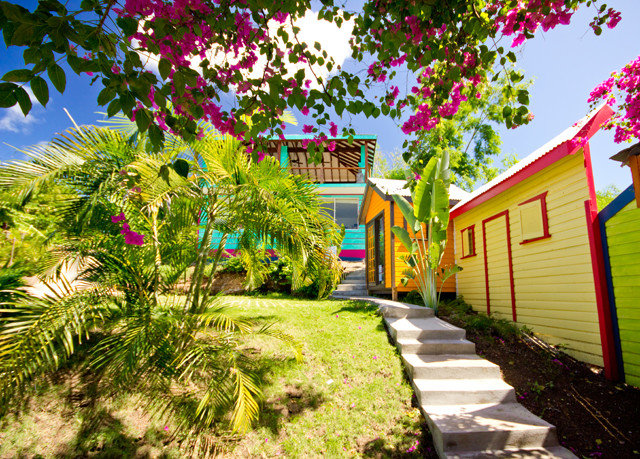 tree grass neighbourhood house flower Garden home yard plant backyard Courtyard Village