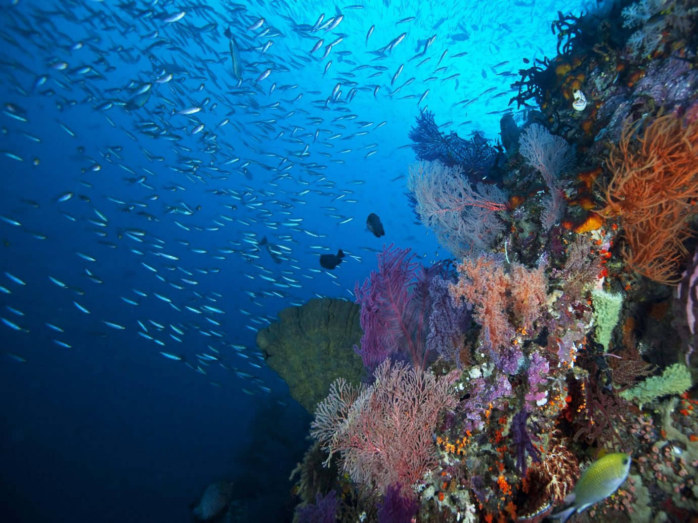 Trip Ideas habitat coral reef reef marine biology underwater coral coral reef fish natural environment biology Ocean Sea diving Scuba Diving water sport underwater diving fish surrounded