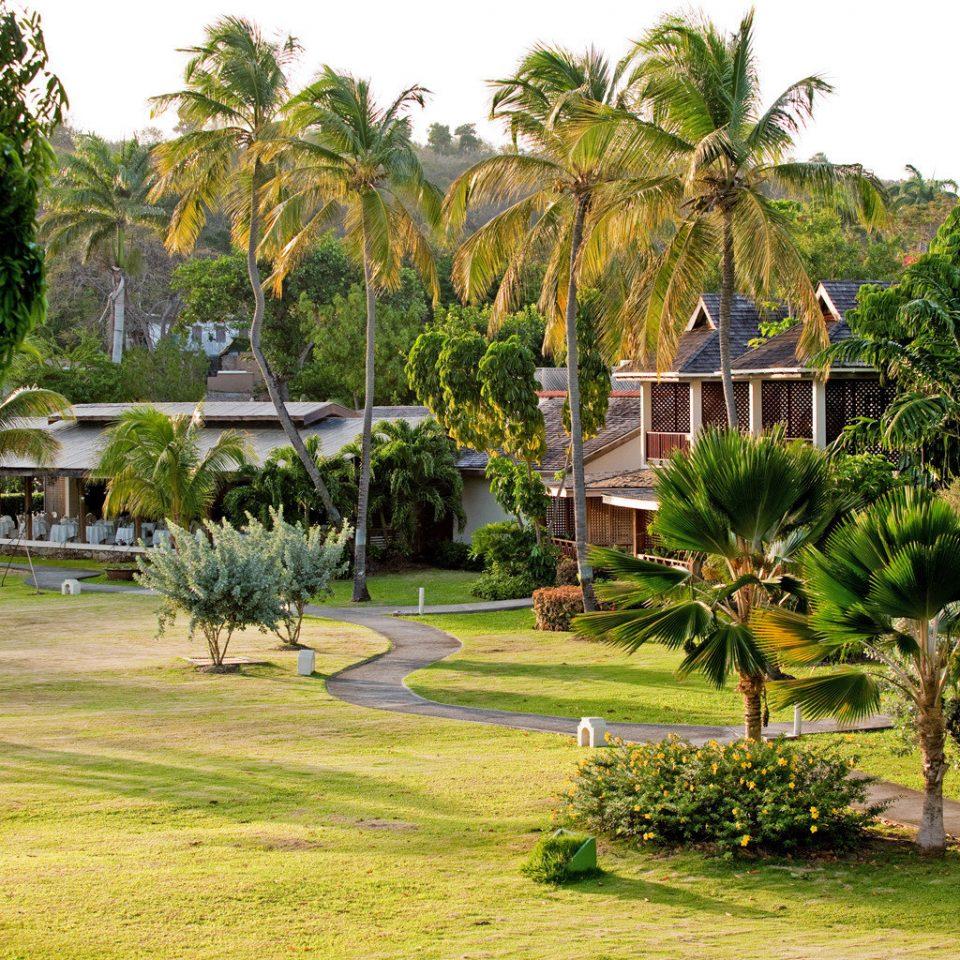 Cultural Eco Exterior Grounds Honeymoon Island Jungle Outdoors Romance Scenic views tree grass Resort botany arecales Garden plant botanical garden palm family Village palm