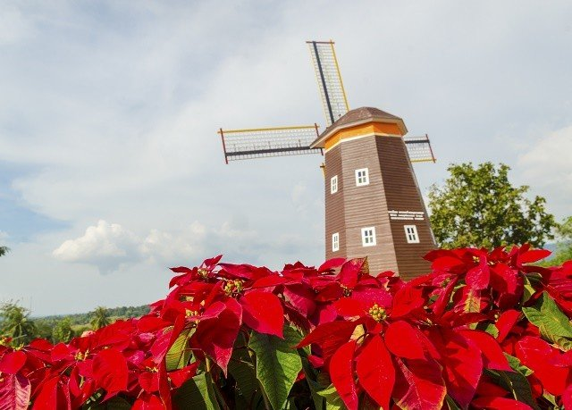 sky flower plant land plant windmill mill flowering plant wind outdoor object day