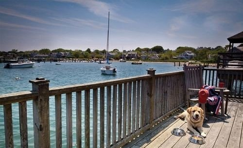 Dog sky water Deck dock Resort wooden marina tied