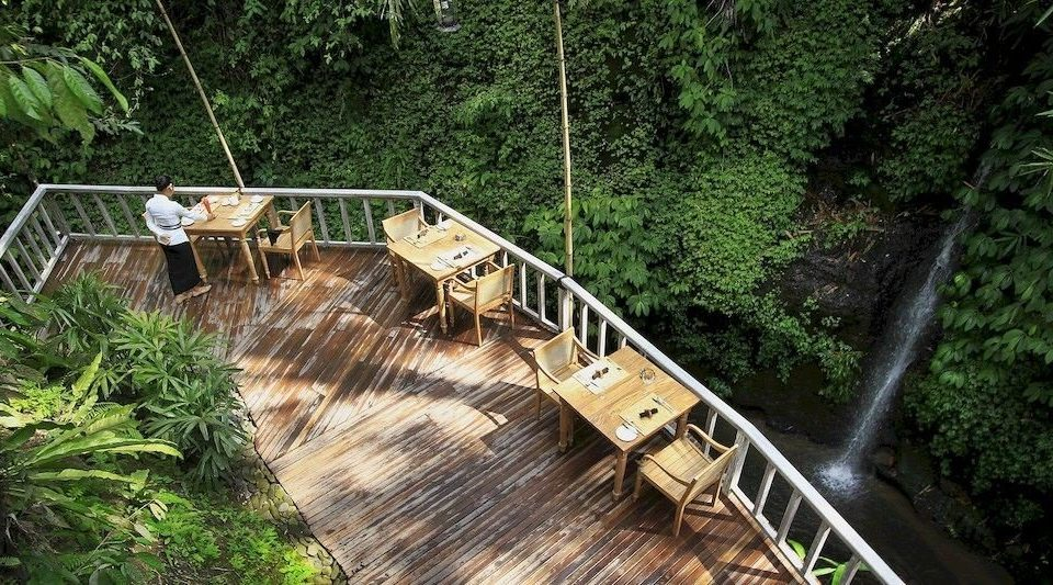 tree habitat bridge rolling stock rope bridge wooden Forest canopy walkway waterway Garden track Jungle suspension bridge plant wooded bushes Deck surrounded