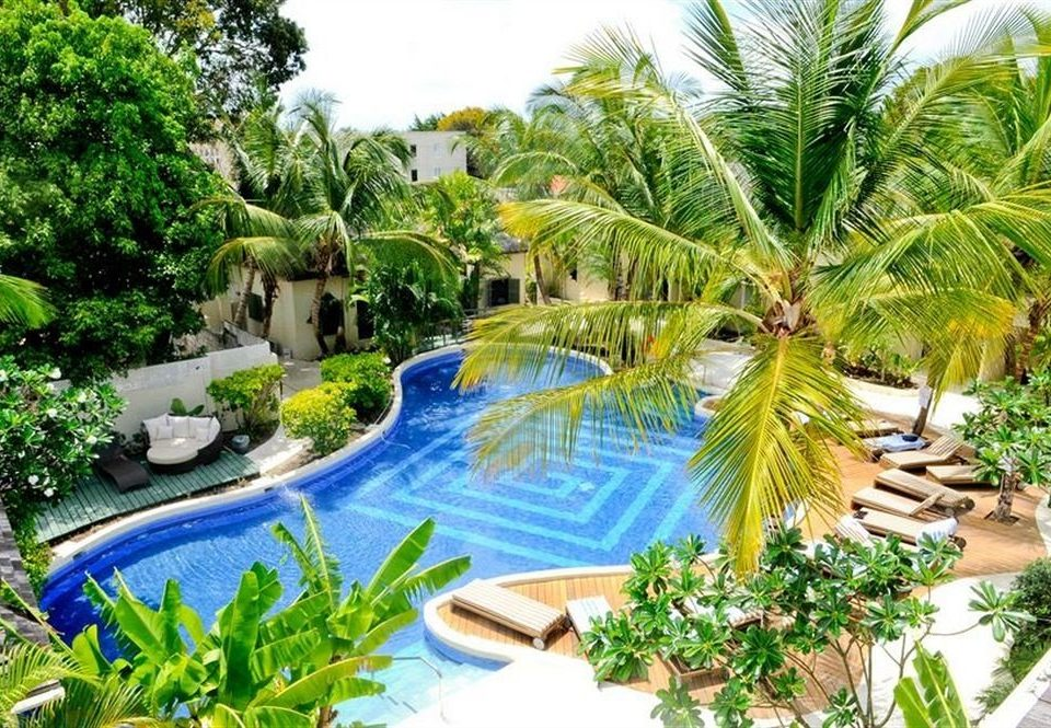 Deck Lounge Luxury Modern Pool tree plant Resort property swimming pool ecosystem arecales caribbean Garden Jungle palm botanical garden tropics rainforest