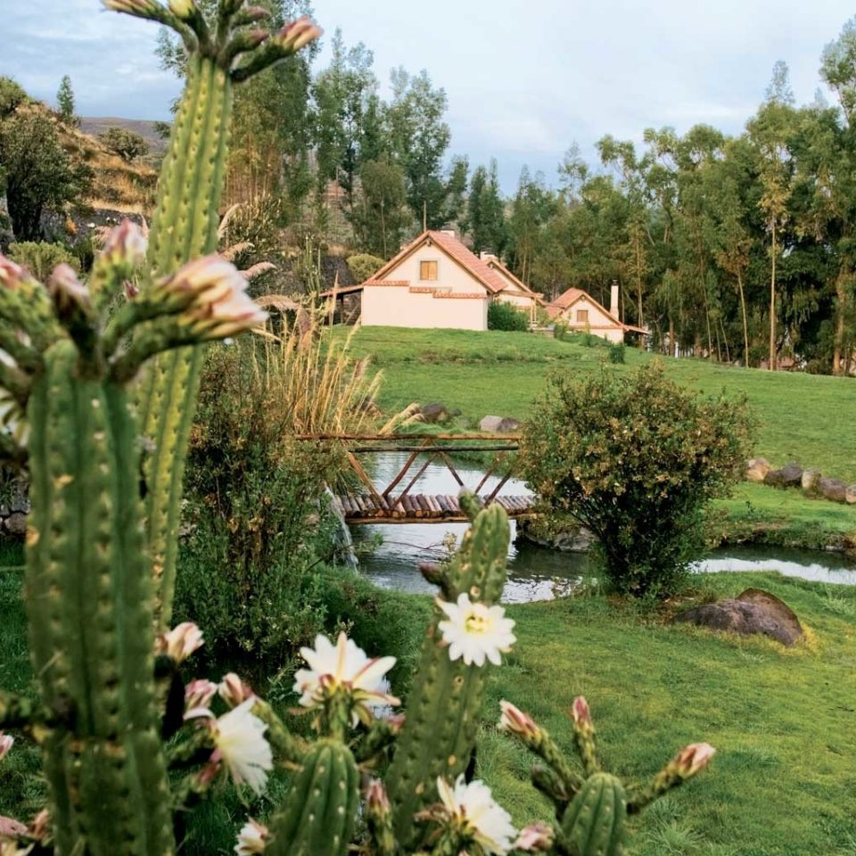 Desert Outdoors Scenic views tree sky grass plant flora Garden botany flower land plant botanical garden lawn backyard Resort yard surrounded lush