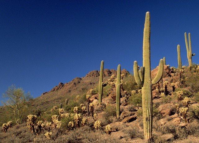 cactus sky plant grass Nature mountainous landforms natural environment tree Desert flora mountain land plant landscape flower rock flowering plant aeolian landform plateau hill hillside