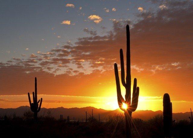 sky Sunset Sun plant horizon sunrise afterglow traffic light setting dawn morning evening cloud dusk sunlight orange silhouette wind Desert clouds distance