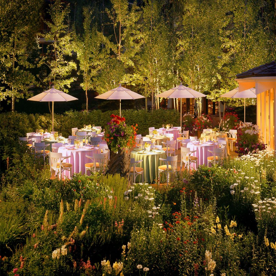 Dining Drink Eat Garden Lodge Terrace tree grass flower flora season floristry autumn colored Forest colorful surrounded