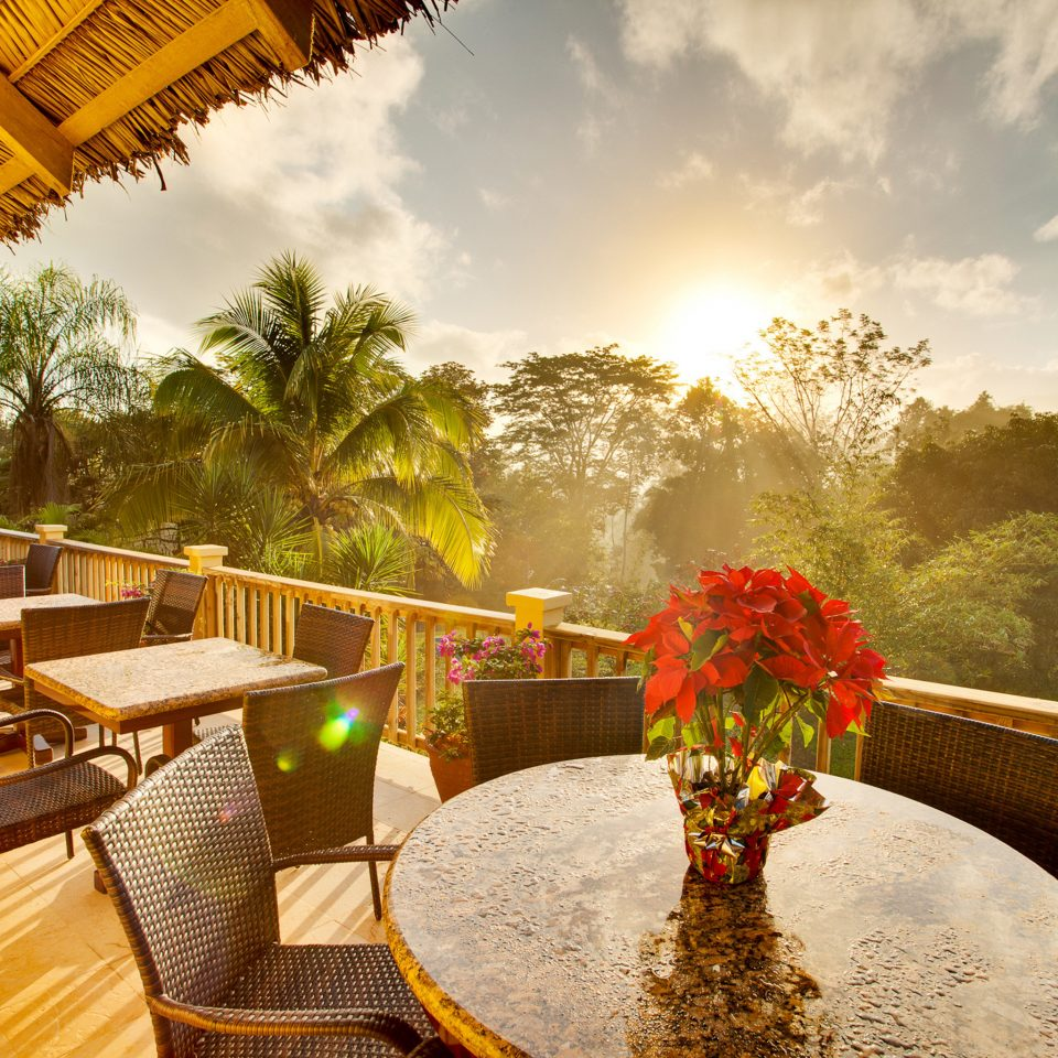 Dining Drink Eat Lodge Outdoors Rustic Scenic views tree flower Resort restaurant hacienda Villa dining table