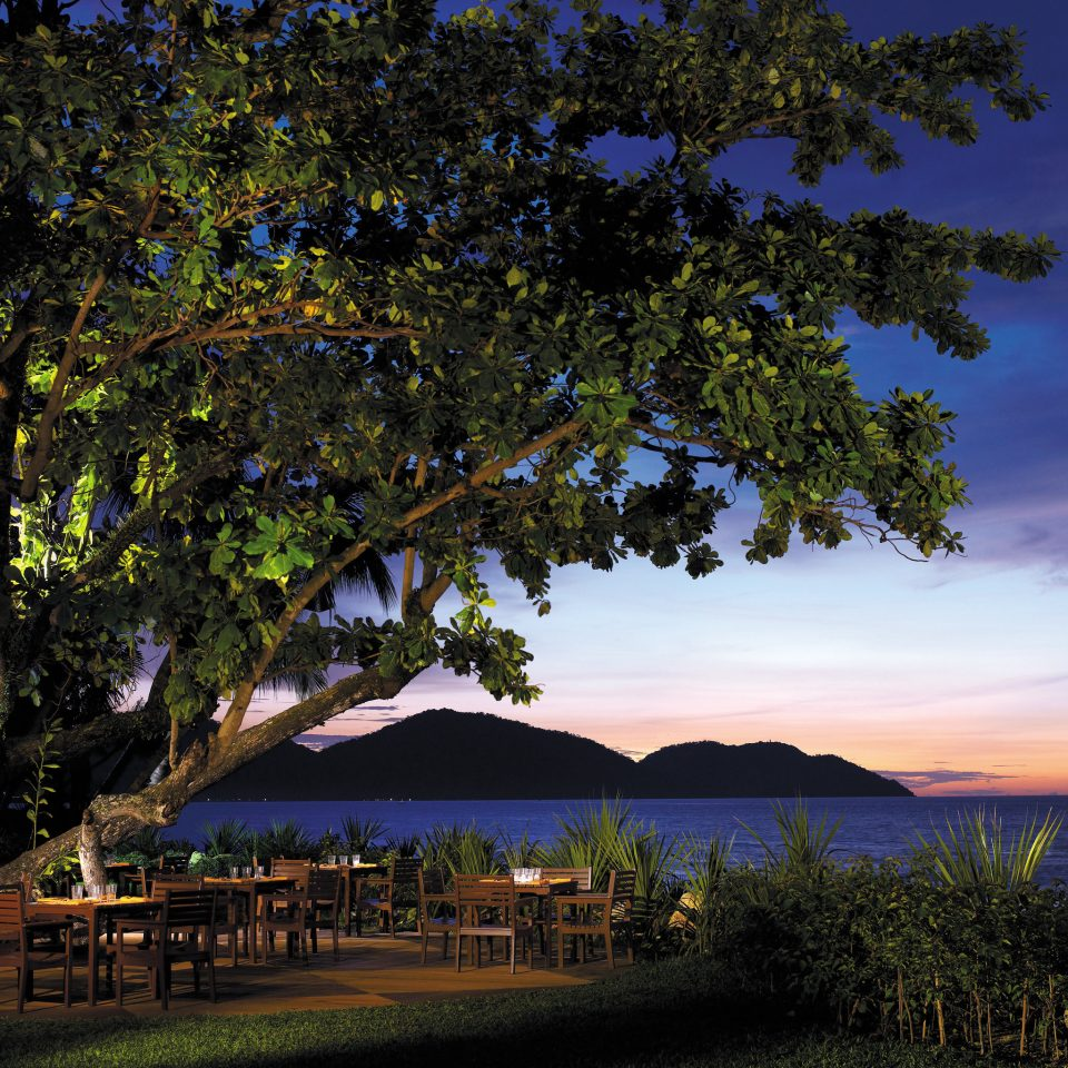 Dining Drink Eat Ocean Sunset tree sky Nature woody plant arecales evening leaf landscape dusk tropics plant