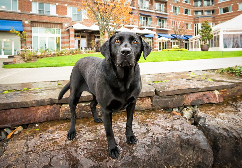 building Dog mammal vertebrate animal dog like mammal street dog black labrador retriever guard dog stone