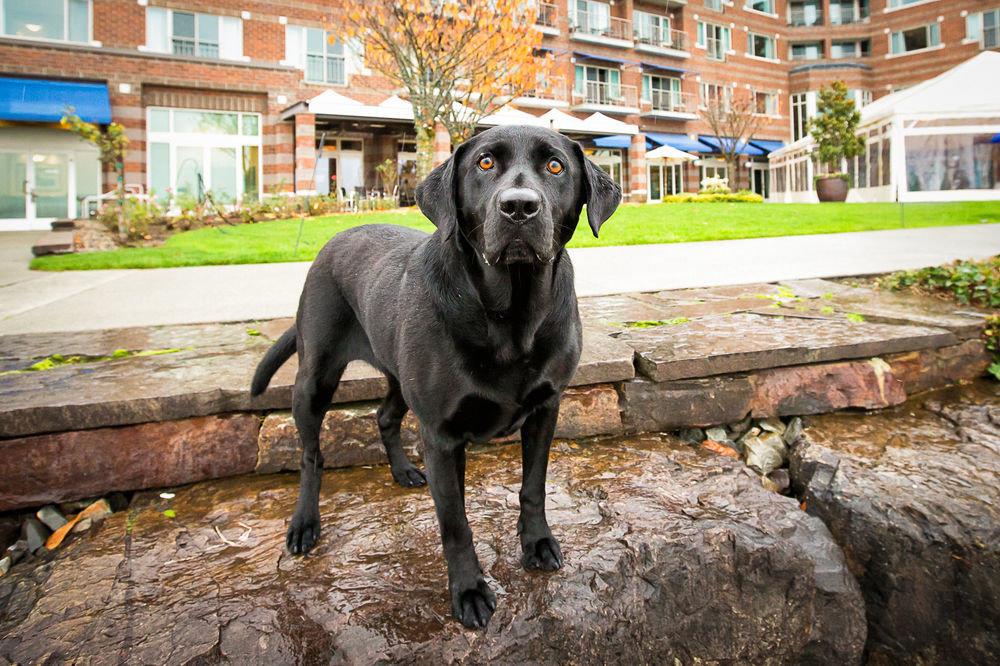 building Dog mammal vertebrate animal dog like mammal street dog black labrador retriever guard dog stone