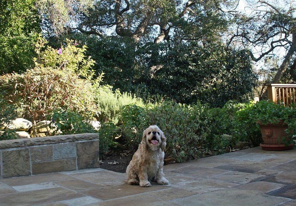 tree ground Dog backyard Garden zoo yard dog like mammal outdoor structure