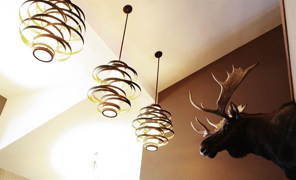 Resort Dog light lighting light fixture illustration material