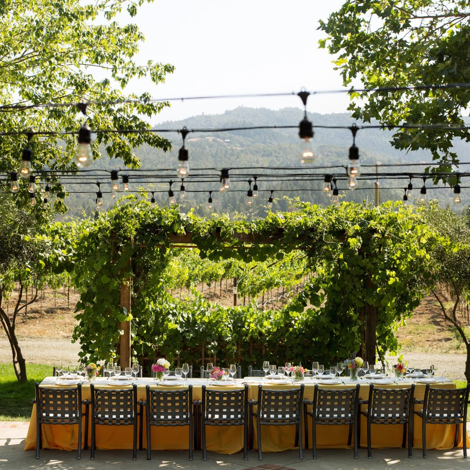 Drink Eat Nature Outdoors Romantic Vineyard Wine-Tasting tree botany plant flower park Garden