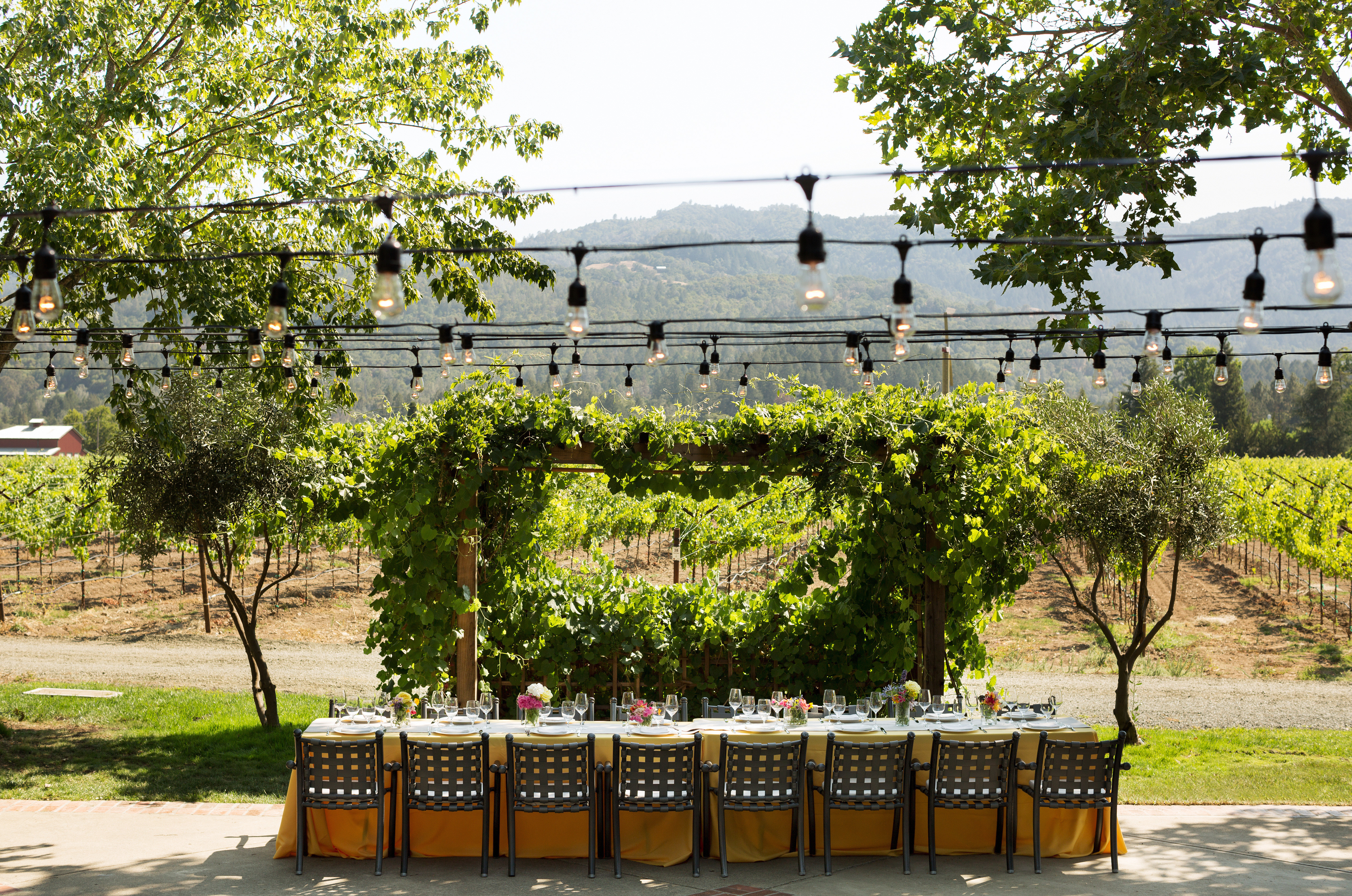 Drink Eat Nature Outdoors Romantic Vineyard Wine-Tasting tree botany plant flower park Garden