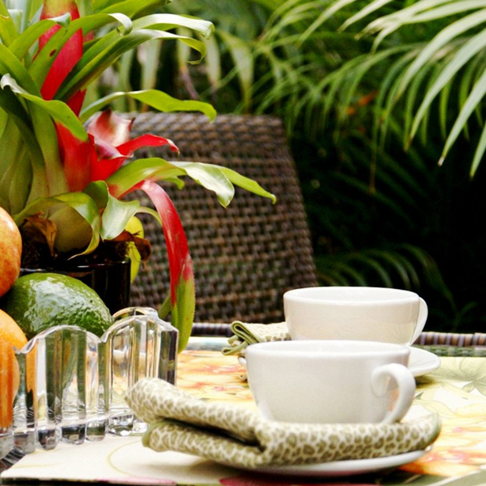 Drink Eat Tropical food plant flower fruit dining table
