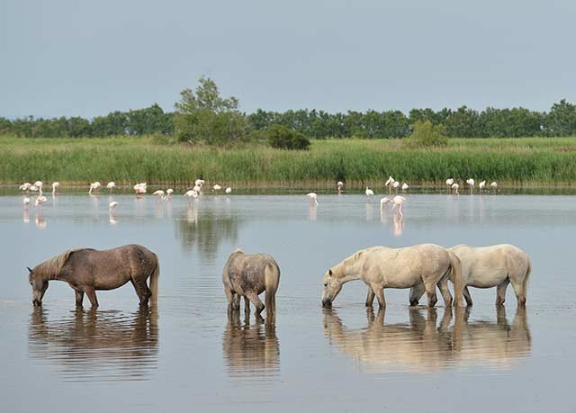 water animal Drink hole herd mammal drinking ecosystem pasture River Lake group grazing Wildlife plain elk deer mare wetland Family gathered pond