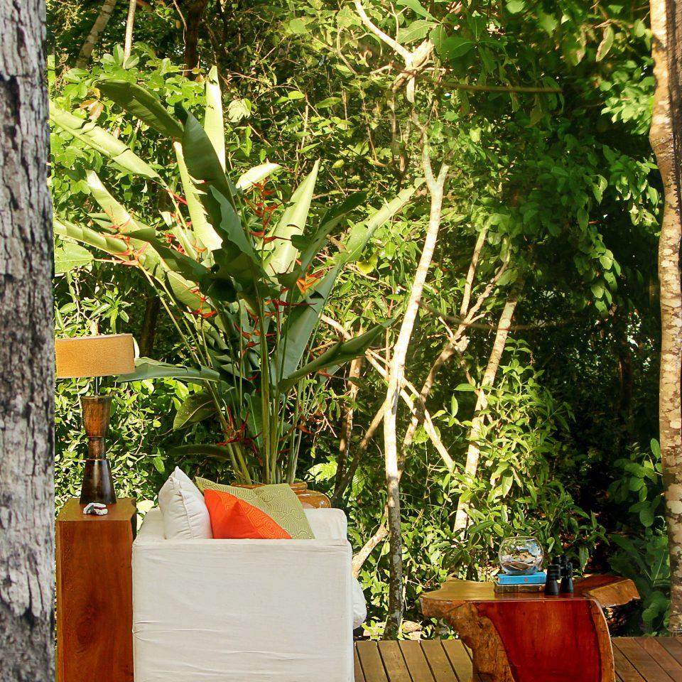 Drink Forest Jungle tree flora green botany plant Garden flower house backyard leaf yard autumn