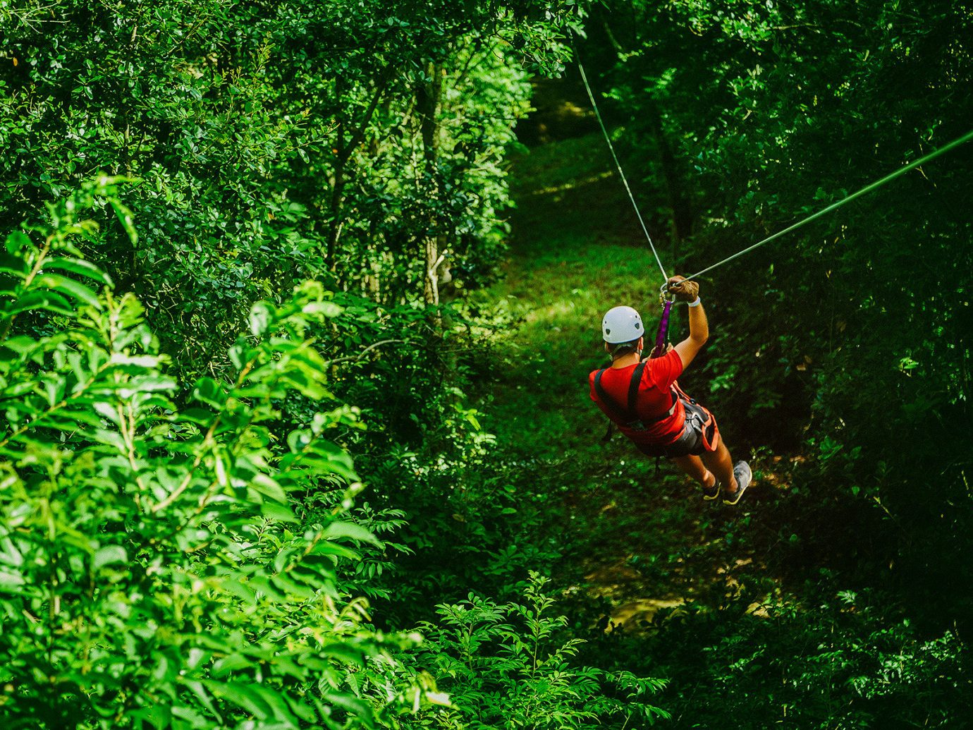 rain forest Trip Ideas zipline tree outdoor habitat green natural environment Forest rainforest Jungle Sport Adventure extreme sport screenshot woodland abseiling wooded