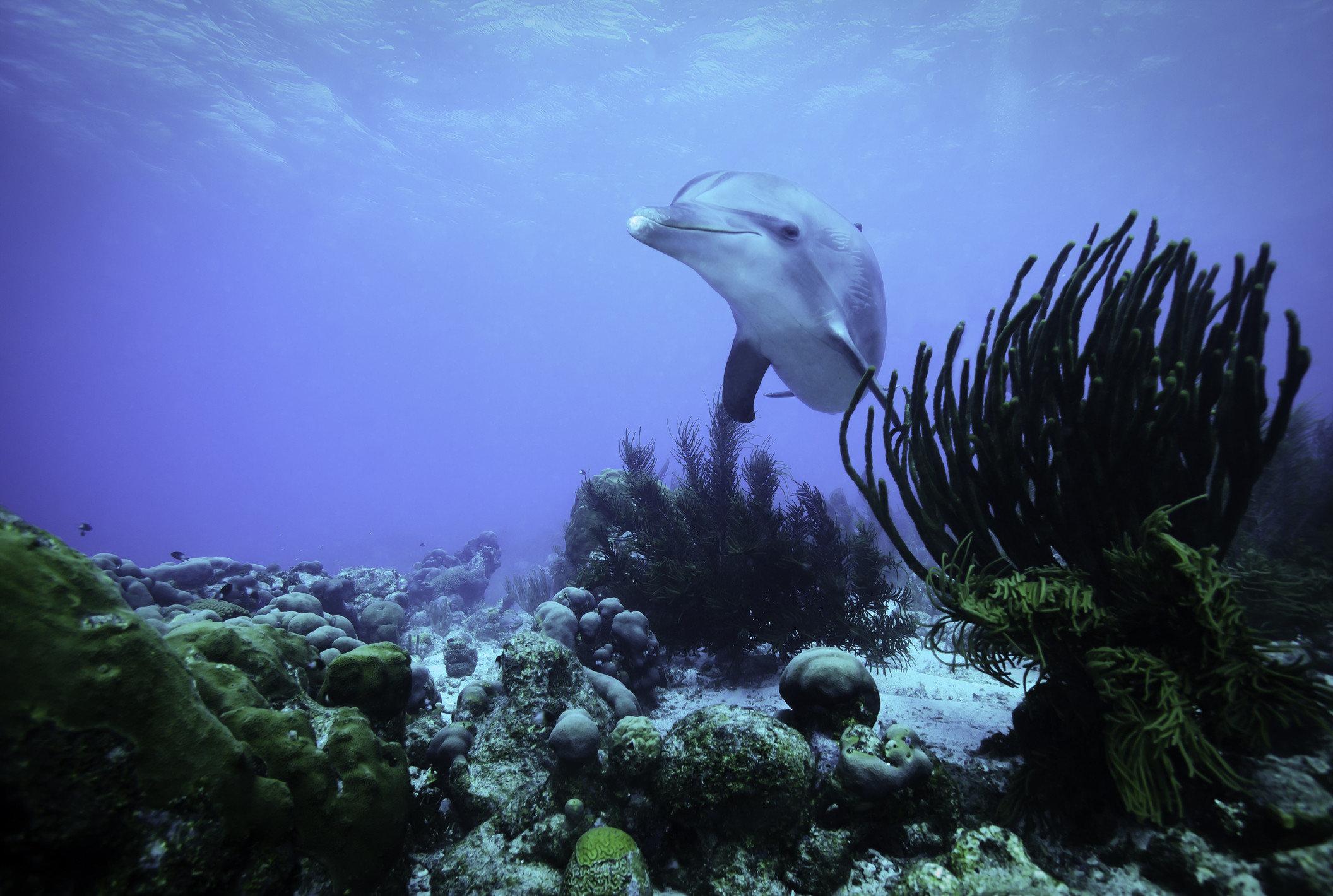 Trip Ideas outdoor marine biology underwater biology Ocean Sea reef coral reef fish