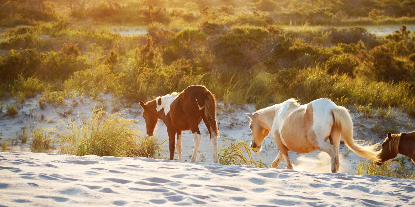 Secret Getaways Trip Ideas outdoor habitat horse pasture herd natural environment mustang horse mammal season grazing morning landscape bovine steppe meadow horse like mammal mare cattle like mammal
