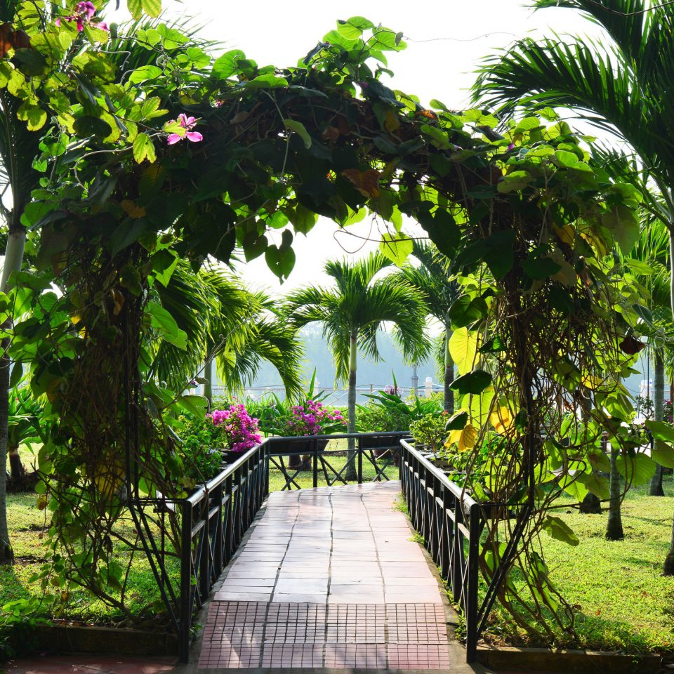 Eco Elegant Garden Grounds Jungle Resort River Tropical Waterfront tree flora botany plant flower arecales botanical garden plantation rainforest tropics shade lined