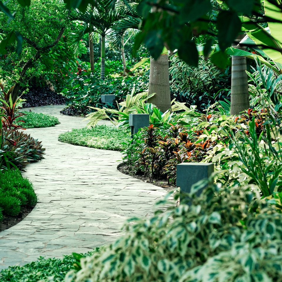 Eco Garden Grounds Jungle Nature Outdoors Scenic views Sea Tropical Waterfront tree green plant flora botany backyard grass yard walkway flower leaf Forest woodland lawn botanical garden landscape architect rainforest pond shrub landscaping bushes surrounded