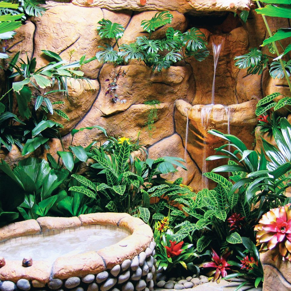 Eco Grounds Hot tub Hot tub/Jacuzzi Jungle Rustic habitat plant natural environment botany Garden rainforest aquarium