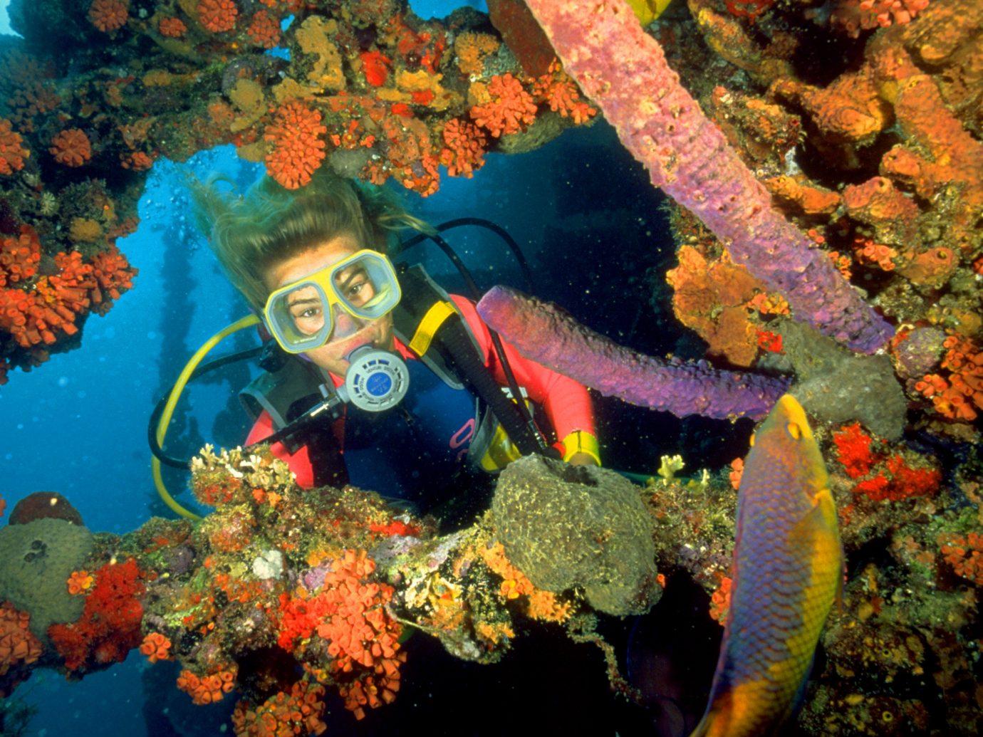 Trip Ideas habitat coral reef reef marine biology coral reef fish natural environment biology water sport underwater coral fish swimming pomacentridae invertebrate aquarium plant colorful colored ocean floor