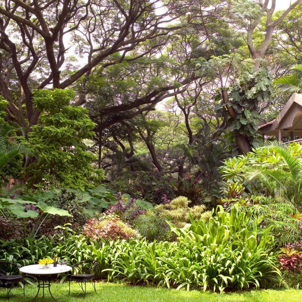 Elegant Grounds Luxury Nature Outdoors tree grass Garden botany yard flower backyard plant lawn botanical garden pond shrub landscape architect woodland landscaping surrounded bushes lush