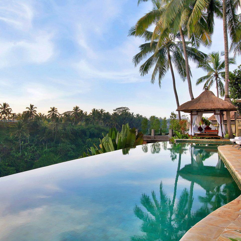 Elegant Luxury Pool Tropical tree swimming pool property Resort Nature Villa arecales Lagoon backyard plant