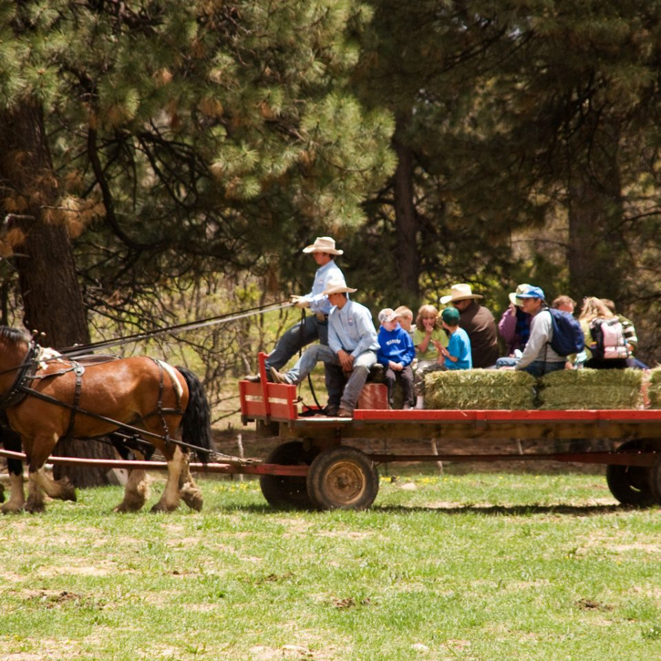 Entertainment Grounds Outdoor Activities Outdoors Ranch tree grass truck horse horse and buggy transport vehicle rural area Farm eventing carriage cart pack animal horse like mammal trail riding racing