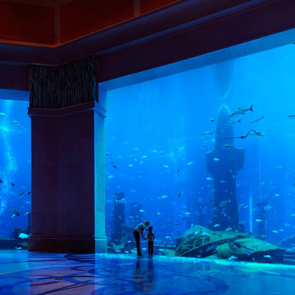 Entertainment Grounds Resort Scenic views Wildlife blue stage underwater screenshot theatre musical theatre aquarium scenographer