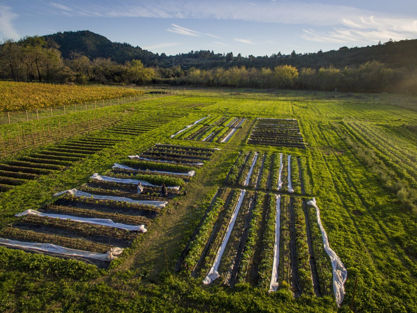 Food + Drink grass outdoor sky track highland agriculture field tree hill rural area plain plantation landscape soil aerial photography Farm paddy field meadow Vineyard valley lush flower traveling railroad long