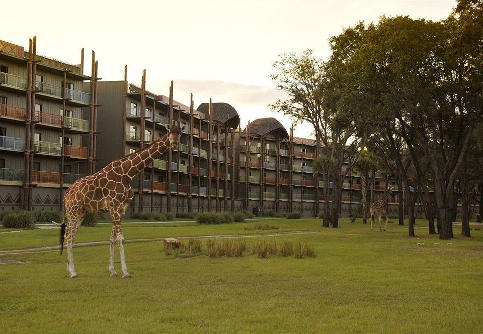 Exterior Family Resort grass tree giraffe sky field green park lush
