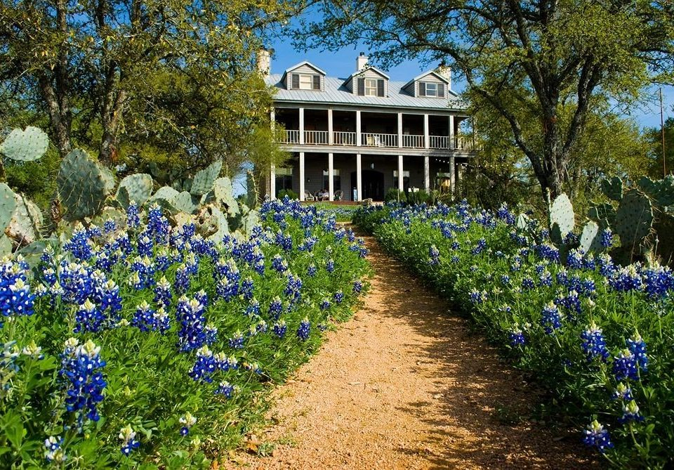 Exterior Inn Rustic tree ground flower Garden plant flora lupin bluebonnet botany land plant woodland flowering plant bushes path wildflower meadow yard shrub lawn botanical garden surrounded Forest stone