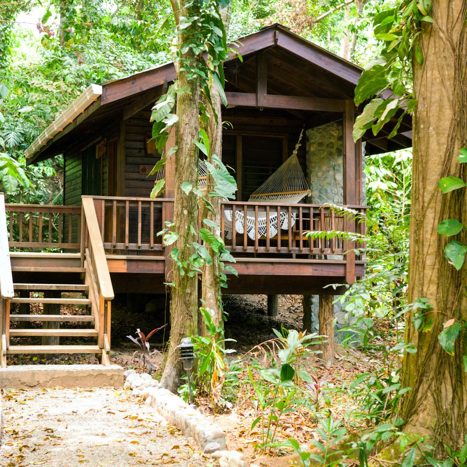 Exterior Jungle Lodge tree building wooden hut tree house log cabin Forest outdoor structure cottage house Garden rainforest woodland backyard lawn porch surrounded stone bushes shade